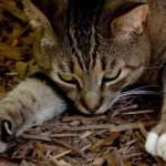 gatti sfrattati dalla parrocchia di san berardo