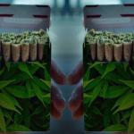 marijuana danni benefici