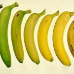 ragno velenoso del mondo banane