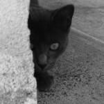 gatto nero giornata anti-superstizione 2014