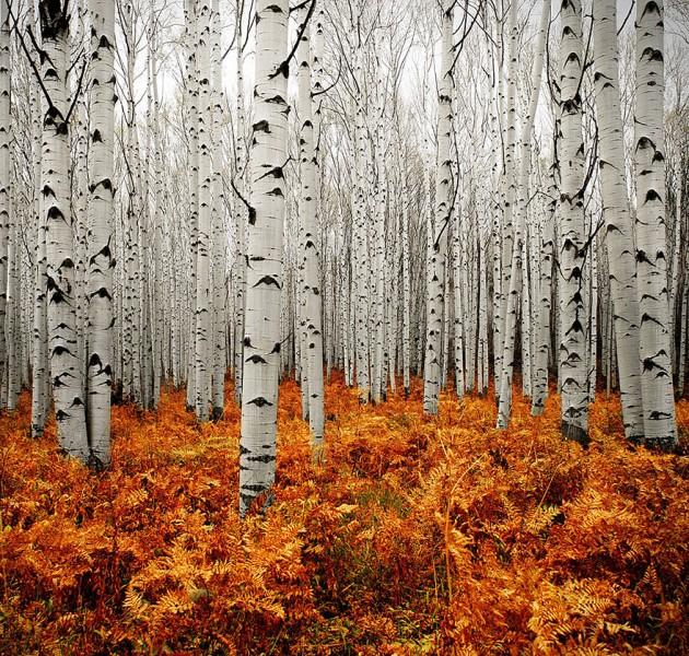 betulle autunno