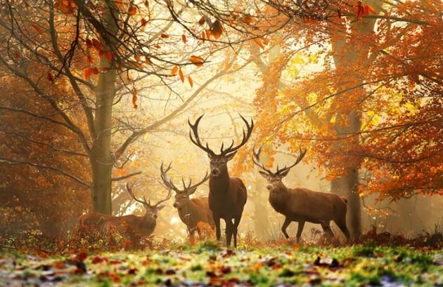 cervi autunno