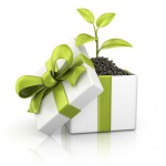 idea regalo eco green