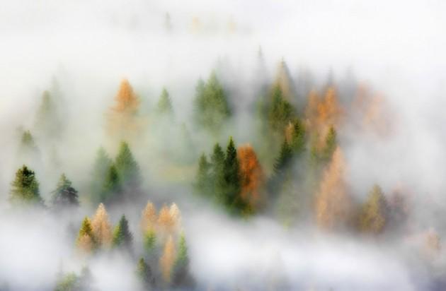 nebbia d'autunno