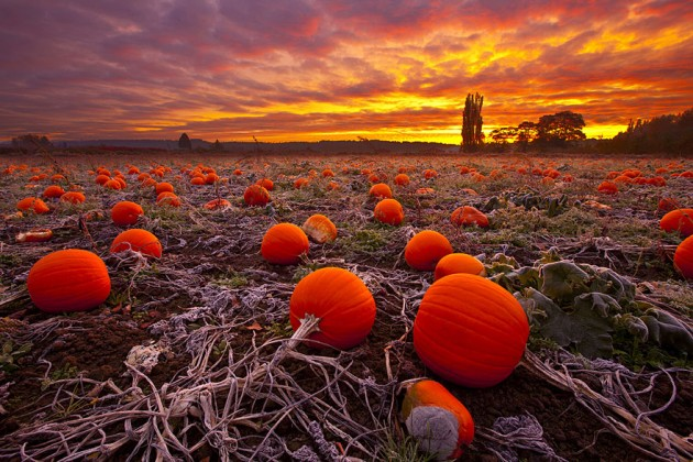 zucche d'autunno