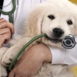 Eutanasia per gli animali il veterinario dice basta