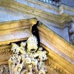 imprenditore triestino sul cornicione di San Pietro