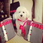 Worldpenny primo blog di moda fatto da un cane
