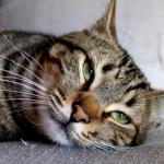 il gatto Toby