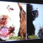 Gandalf cane di Elena Ceste