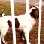 ritrovato il cane di Elena Ceste