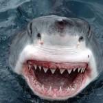 Norman Atlantic vittime squali uccise