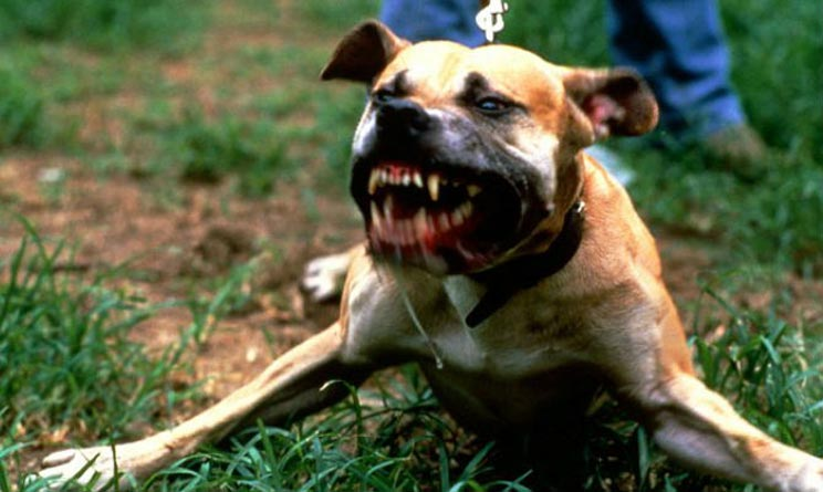 Ragusa pitbull morde bambina 18 mesi Scicli