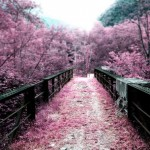 viaggi primavera, fioritura