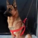 Akil cane mort a Tunisi nella strage Isis