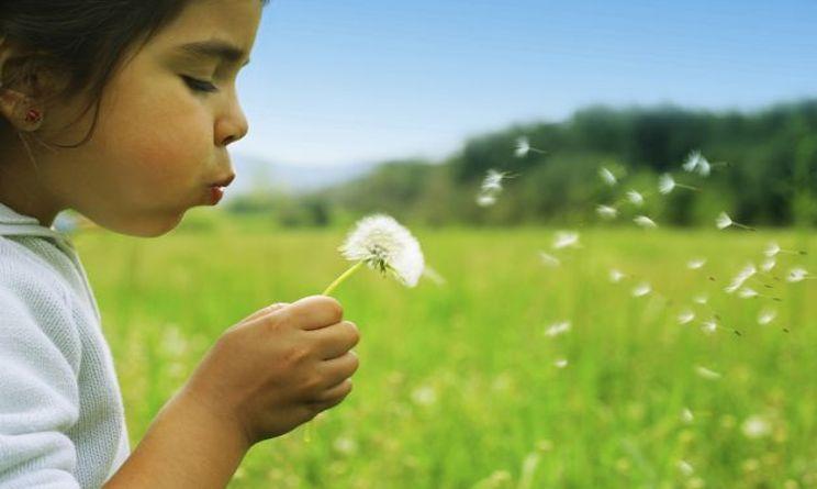 allergie polline