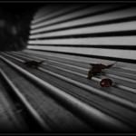 ricerca sulla solitudine e la longevità