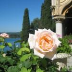 roseti dei Grandi Giardini Italiani