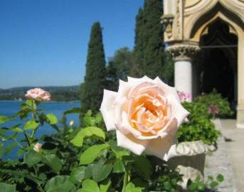Ponte 2 giugno 2015: ecco dove andare per visitare i roseti più belli d'Italia (FOTO)