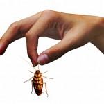 come eliminare scarafaggi in casa