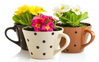 Arredare casa fai da te: 3 idee per vasi da fiori originali e a costo zero