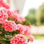 Ecco i fiori e le piante più belle per l'arrivo dell'estate