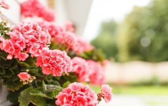 Fiori e piante, ecco le più belle scelte per l'arrivo dell'estate
