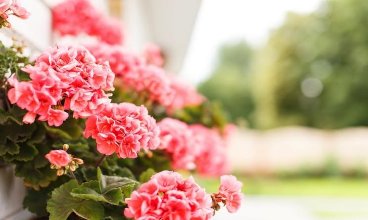 Fiori e piante, ecco le più belle scelte per larrivo dellestate - U...