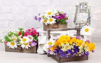 Il giardino in casa, ecco come realizzare il vostro angolo verde con fiori e piante