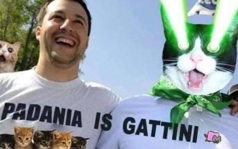 Gattini su Salvini: successo virale, ecco l'intervista di UrbanPost agli ideatori