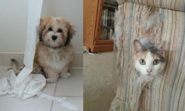 Non lasciate i vostri animali da soli in casa questo for Animali da casa
