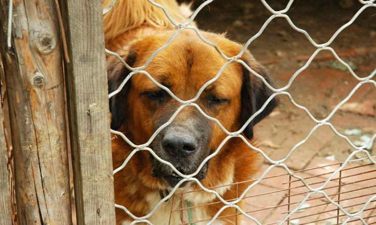 imola polemica assessore pd per cani randagi