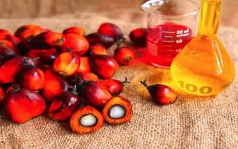 Olio di palma nocivo, ecco i danni all'uomo e all'ambiente