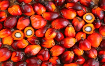 Olio di palma nocivo: ecco perché fa male e cosa evitare