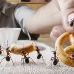 formiche in casa rimedi