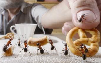 Formiche in casa, 5 rimedi naturali per tenerle lontane durante l'estate