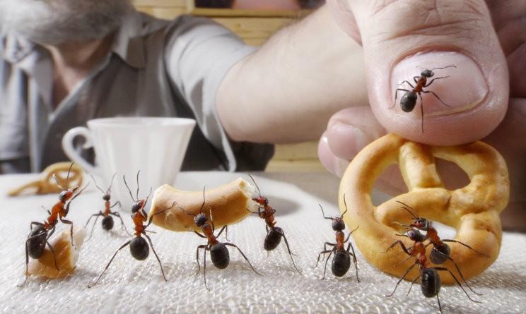 Formiche in casa 5 rimedi naturali per tenerle lontane - Come eliminare le formiche in casa ...