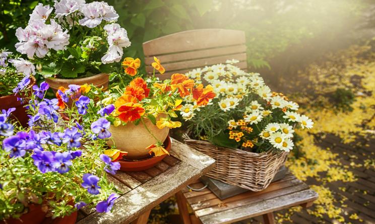 come salvare le piante in estate, combattere afa, consigli utili