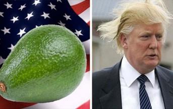 Donald Trump Twitter: perde le elezioni contro l'avocado