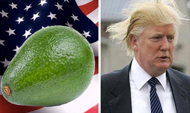 avocado vs donald trump