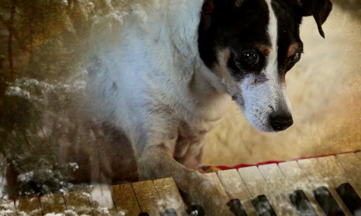 mostra del cinema di venezia, heart of dog trama