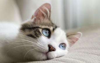 Stati Uniti, uccise 21 gatti: condannato a 16 anni di carcere
