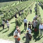 eventi Turismo del Vino vendemmia 2015