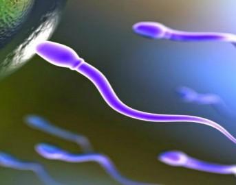 Donatore di sperma: qual è l'uomo ideale che le donne cercano?