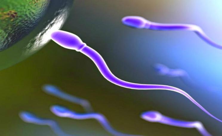 Donatore di sperma caratteristiche