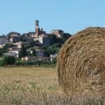 Fiera di San Martino 2016 sagre in tante città