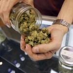 cannabis piemonte