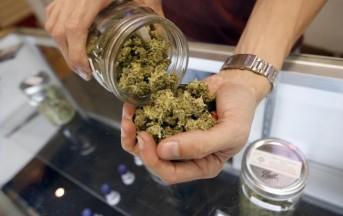 Piemonte: cannabis a scopo terapeutico e in farmacia, cosa curerà?