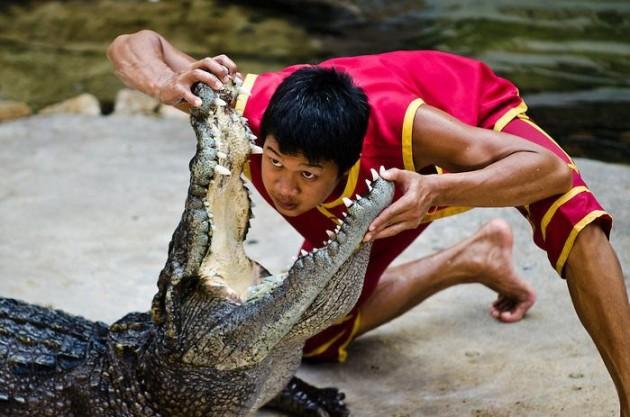 lottatori coccodrilli