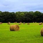 Offerte di lavoro al Consiglio per la Ricerca in Agricoltura